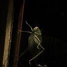 Bug in Pennsylvania by melanie1313