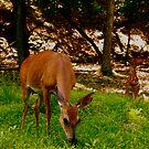 Deer in Pennsylvania by melanie1313
