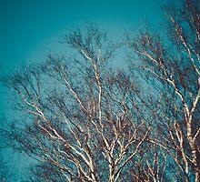 Himmelsbaum by Katy  Erdbeermond