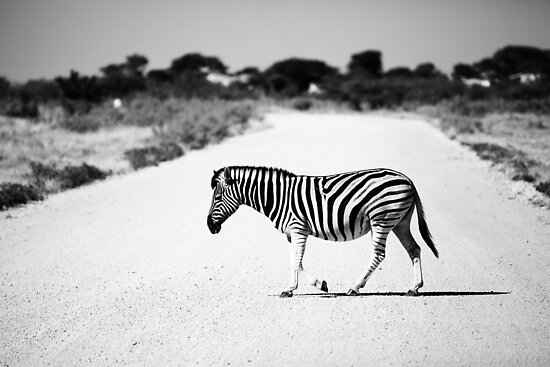 Zebra Crossing by muzy