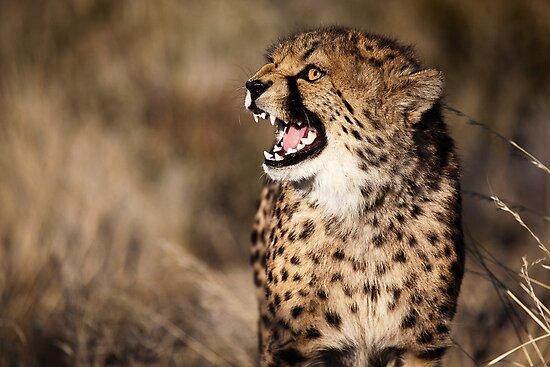 Cheetah Cub by muzy