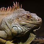 Green Iguana by Firefly4029