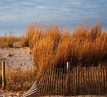Dune Grass & Fence by Debra Fedchin