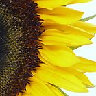 Sunflower by feistyfotos