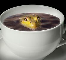 Yikes there is a Frog in my Java by Randall Nyhof