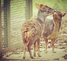 Pudu Loving by angelimagine