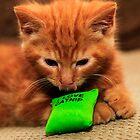 I Love Cat Nip by Paul Knowles