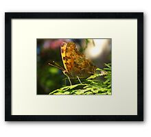 An exclamation in this Eastern Comma Polygonia Framed Print