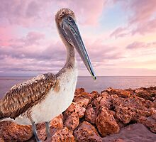 Pelican on Captiva Island by Bonnie T.  Barry