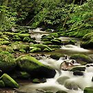 moss in the Smokies by dc witmer