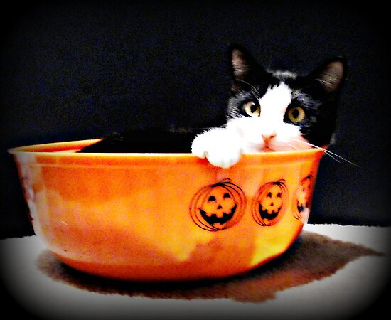 Trick Or Treat......Or Just Trick! by Vince Scaglione