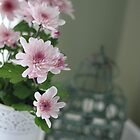 Chrysanthemum Pink by Debbie-anne