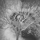 frosty tree black and white abstract by Ronald Eschner