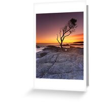 """That Tree"" ∞ Binalong Bay, Tasmania - Australia Greeting Card"