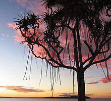 Pandanus Palms by tracyleephoto