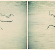 Jellyfish Diptych by Sybille Sterk