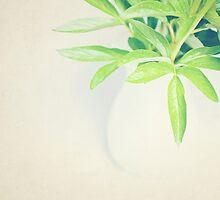 Peony Leaves by Jo Hopgood