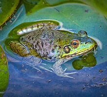 Frog resting on a Lily Pad No.0210 by Randall Nyhof