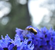 Bumble Bee by worretphoto