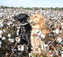 Cotton Field Puppies  by Lupa517