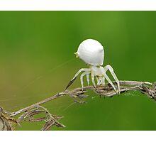 crab spider like jellyfish Photographic Print