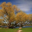 """""""  The Old Willow  """" by fortner"""