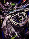 eye... different species by banrai