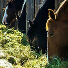 Horses Feeding by SRLongstroth