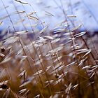 grass on blue by waitin' for rain