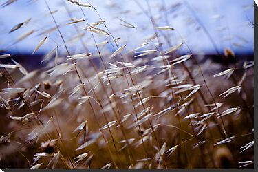 grass on blue by Victor Bezrukov