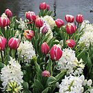 Flowers and Feathers - Keukenhof Gardens by BlueMoonRose