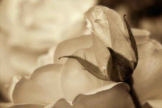 Romance in  sepia by Celeste Mookherjee