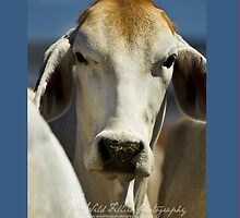 Holy Brahman Cow - iPhone Cover by wildfillies