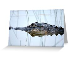 Alligator in the Everglades Greeting Card