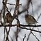 Two Birds on a Tree Branch by Barry Doherty