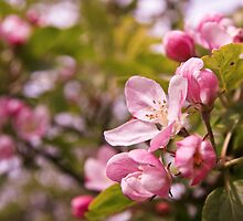 Blossom Blooms by Moonlake