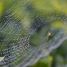 Lacy Web by TheaShutterbug