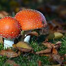 Autumn.....it's toadstool season! by gmws