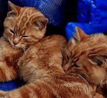 You make a great pillow by Teri Metcalf