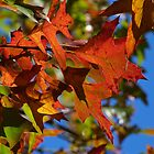 Autumn In Australia by Margaret Saheed