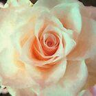 Painted Rose 03 by Karen  Securius