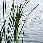 MUUSA lake side grasses by Rogere0829