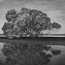 Black and White Reflections by Ben Messina