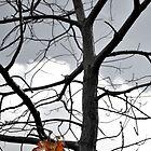 Halloween Tree by Pschtyckque