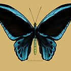 Blue Birdwing Butterfly by Walter Colvin
