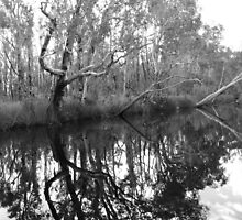 Noosa River Everglades - Reflections 2 (b&w) by Sammy Nuttall