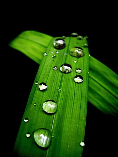 November Rain by Kitsmumma
