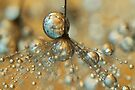 Golden Dandy Shower by Sharon Johnstone