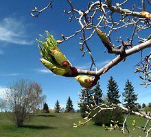 Power of Spring by Olga