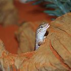 Lizard from the Outback in Australia by mechelle142